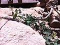 Manayupa en comunidad de Vicos, Áncash.jpg
