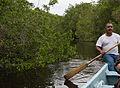 Mangrove in La Manzanilla.jpg