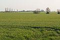 Manor Farm fields, Needingworth - geograph.org.uk - 392747.jpg