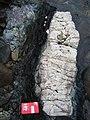 Metasomatized dyke in serpentinite Nelson New Zealand.jpg