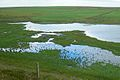 Mill Dam RSPB wetlands, extreme northern verge, Shapinsay.jpg