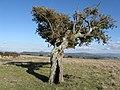 "Monte Cheja, "" la velina"" - panoramio.jpg"