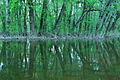 Morava's flooded forest 04.jpg
