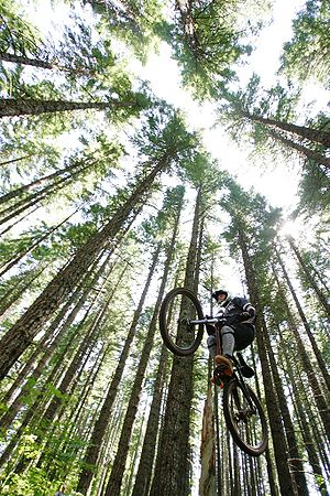 Mountain biking - Mountain biker gets air in Mount Hood National Forest.