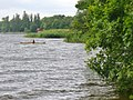 Mueggelsee - Noerdlichen Ufer (Mueggel Lake - Northern Bank) - geo.hlipp.de - 38487.jpg