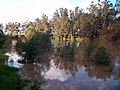 Murrumbidgee River - July 2010 (6).jpg