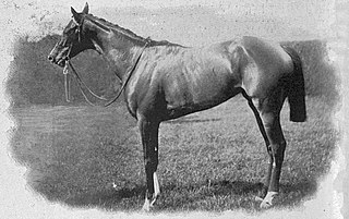 Musa (horse) British-bred Thoroughbred racehorse