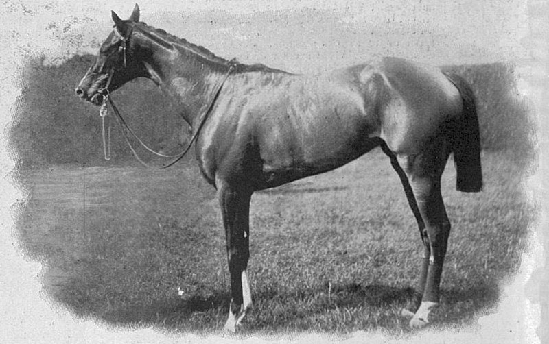 File:Musa (horse).jpg