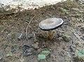 Mushroom so far.jpg