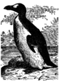 NSRW Great Auk.png