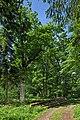 Naturdenkmal Alte Eiche, Kennung 82350800006, Wildberg, von Osten 01.jpg