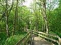 Nature Reserve nr. Barton Broad - geograph.org.uk - 451290.jpg