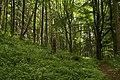 Nature reserve Žižkův vrch in summer 2012 (14).JPG