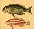 Naturgeschichte in Bildern mit erläuterndem Text (Taf. LXXII) (6059216624).jpg