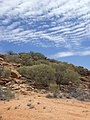 Near Alice Springs - panoramio.jpg