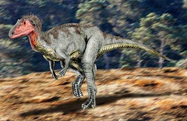 Neovenator NT