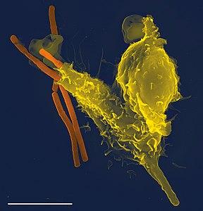 免疫系's relation image