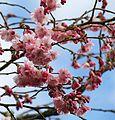 New Blossom (33284703542).jpg