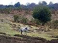 New Forest pony near the High Corner Inn - geograph.org.uk - 1708744.jpg