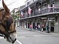 New Orleans Mule Head Royal St Phillip French Quarter.jpg