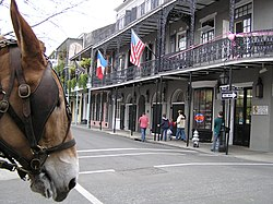 New Orleans Mule Head Royal St Phillip French Quarter