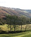 Nidderdale at Limley - geograph.org.uk - 1129606.jpg