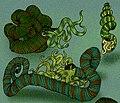 Nipponites Yezoceras.jpg