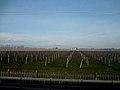 No trem, a caminho de Veneza... plantações de uva é o que não falta. (8573531982).jpg