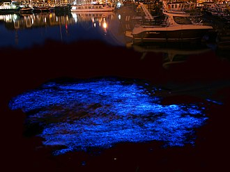Milky seas effect - This long-exposure photo shows the bioluminescence of Noctiluca scintillans in the yacht port of Zeebrugge, Belgium