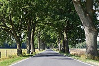 Oak avenue, Dänschenburg.jpg