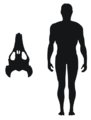 Ocepechelon size comparison.png