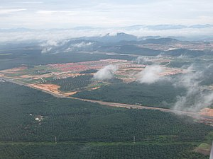 Deforestation in Malaysia - Oil palm plantations in Sarawak, Malaysia