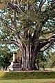 Old Bodhi Tree.jpg
