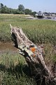 Old tree trunk on the foreshore - geograph.org.uk - 901043.jpg