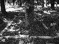 Olivewood Cemetery, Houston, Texas 0505101337BW (4589767115).jpg