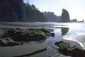 Olympic National Park coast.jpg