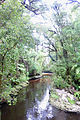 Oparara Basin the River from the footbridge Downstream panoramic v.jpg