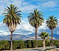 Oranges, Palms and Mountains, Redlands, CA 1-08 (25717740061).jpg