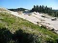 Oregon Dunes Overlook - panoramio.jpg