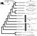 Osteostraci phylogeny.tif