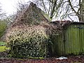 Overgrown outhouse near the stables - geograph.org.uk - 1155799.jpg