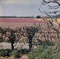 Overzicht over een bloemenveld - Lisse - 20382307 - RCE.jpg