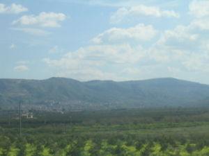 Palagonia - Image: Palagonia