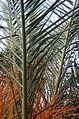 Palm 7 2013-07-10.jpg