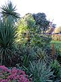 Palm shrubs at Rhodes Arts Complex Museum Bishop's Stortford Hertfordshire England.jpg