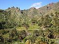 Palmeral en la Viña Vieja (San Andrés, Tenerife).JPG