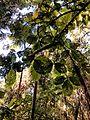 Parque Estadual da Cantareira, Núcleo Engordador.jpg