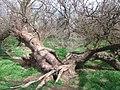 Parque Nacional de las Tablas de Daimiel, Ciudad Real (512699393).jpg