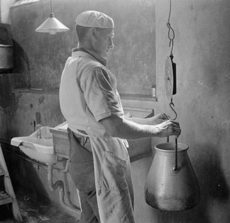 Clotted cream -  A 'Cow Man' weighs milk at Dartington, 1942