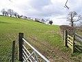Pastureland near Bryneglwys - geograph.org.uk - 364047.jpg
